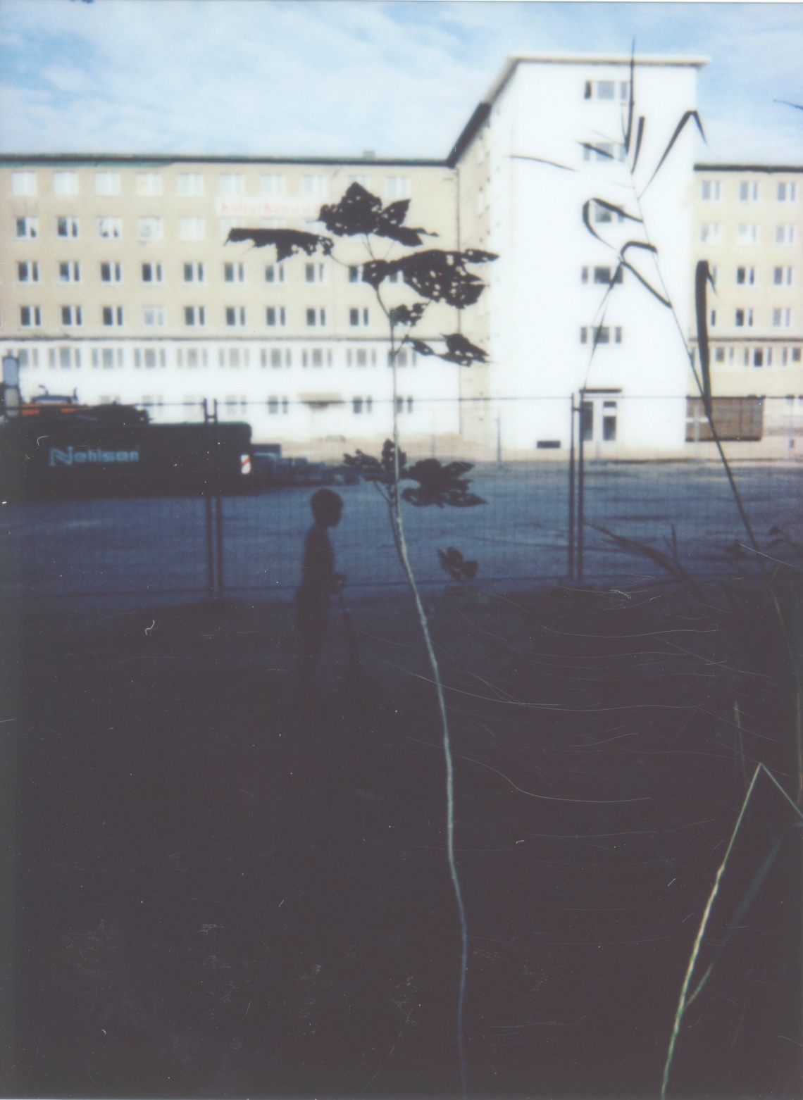 Prora-Baum 020 Kopie