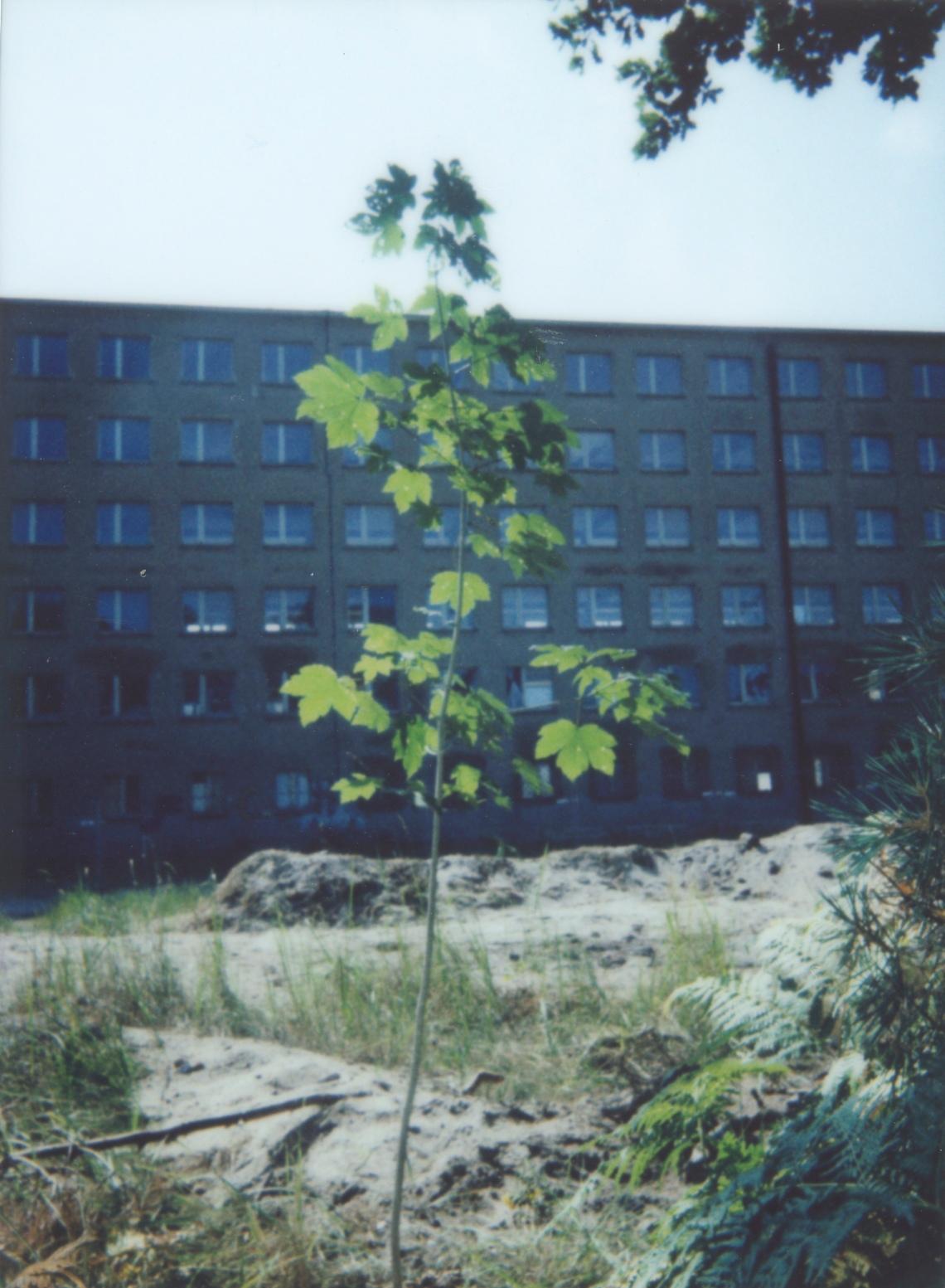 Prora-Baum 028 Kopie
