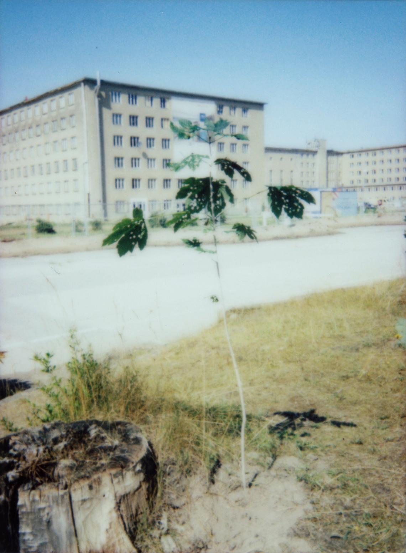 Prora-Baum 033 Kopie